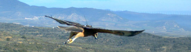 The history of the Bonelli's eagle conservation