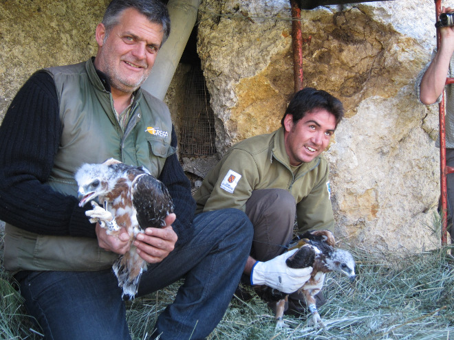 Ernesto and Tomeu release two Bonelli's Eagle chicks in Mallorca.