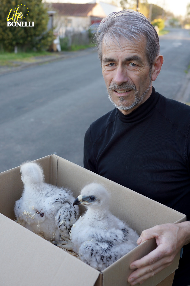 Christian Pacteau with Argonne and Verdun, the first Bonelli's Eagles chicks.